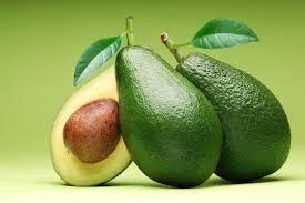abacate-valores-nutritivos-cultivo