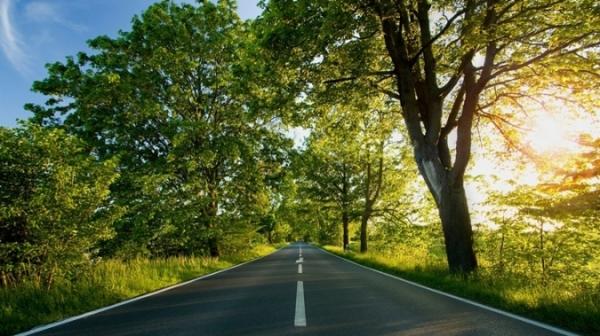 arborizacao-rodovias