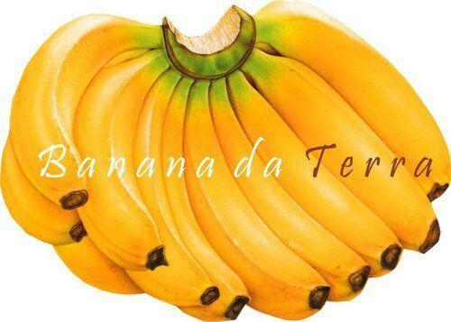 cultivo-banana-da-terra