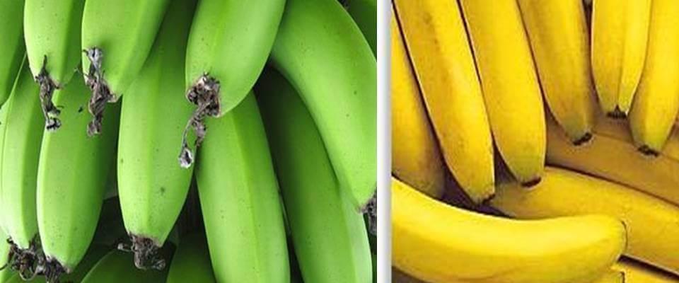 banana-verde-emagrece-e-madura-engorda