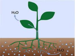 água do solo