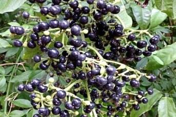 insulina-vegetal-frutos