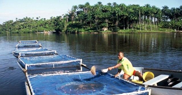 piscicultura-extensivo