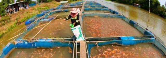 piscicultura-intensiva